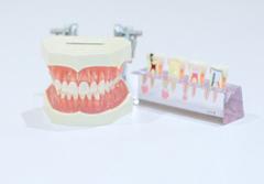 歯の模型、歯の埋め込み